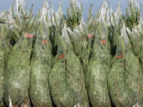 Сетка-рукав для упаковки кроны деревьев